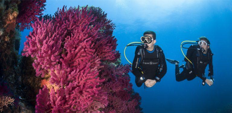Manex Diving Banner 1
